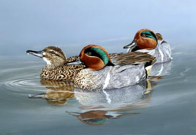 Nevad Duck stamp by Nolan Haan